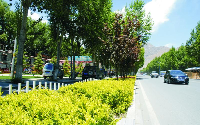 宁县县城新区天赐路东侧绿化工程