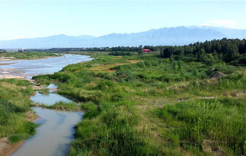 渭河西安市周至段堤防防护林工程5标段